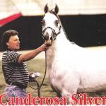 Conderosa Silver